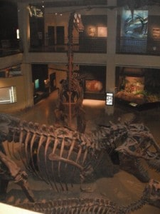 Museum Natural Science Houston Ticket Prices