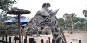 GiraffeFeature