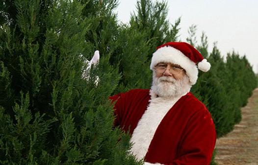 Take Care Of A Christmas Tree