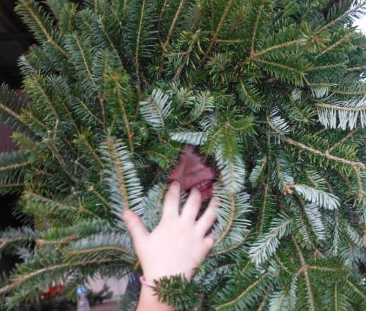 Dewberry Christmas Tree Farm