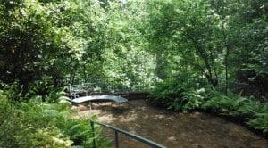 Rienzi Garden Paths
