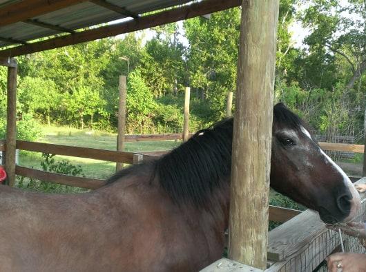 Clays Horse