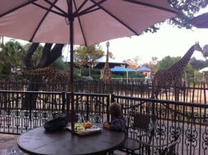 Girafes at Twiga Cafe at Houston Zo0