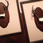 Grace Grey Designs Framed Antlers