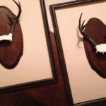 Grace Grey Designs Framed Antlers
