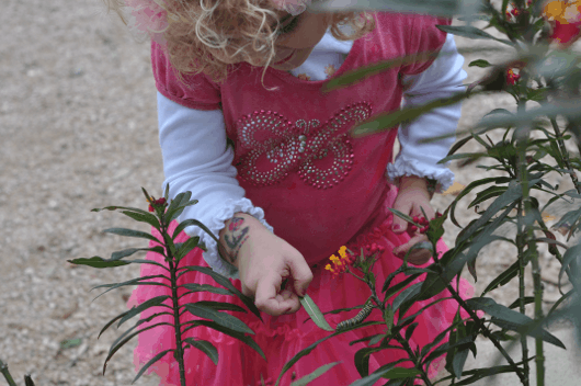 Brooke looking at a caterpillar at Houston Craft Museum