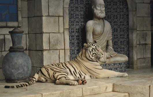 White Tiger at Downtown Aquarium