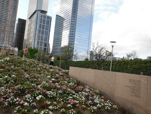 Flowers and Hill at Discovery Green