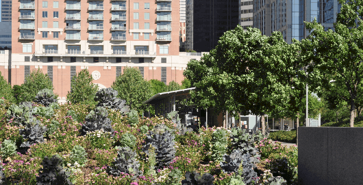 Discovery Green Flowers and View of One Park Place