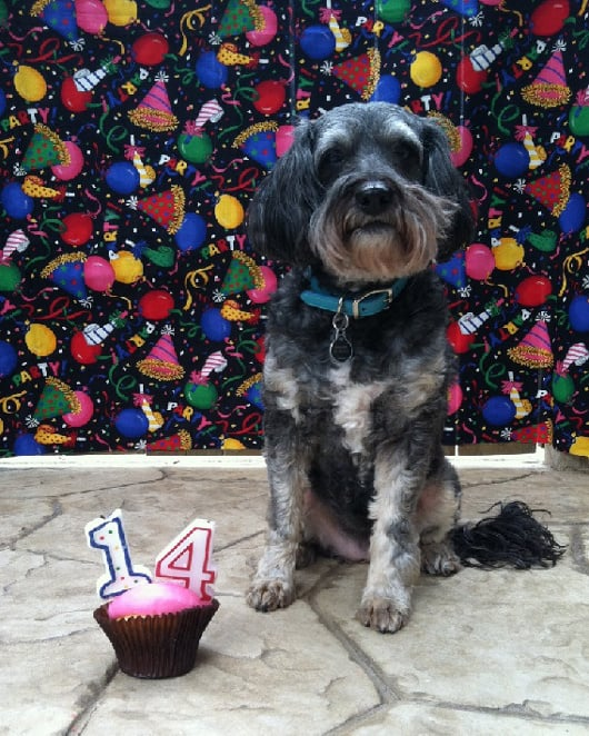 Gingers 14th Birthday
