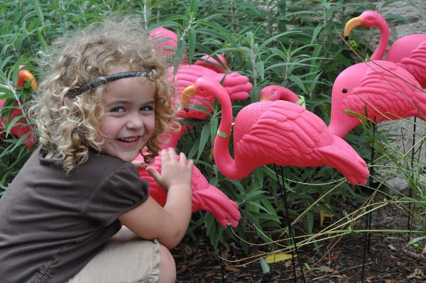 Brooke and Flamingo Flock