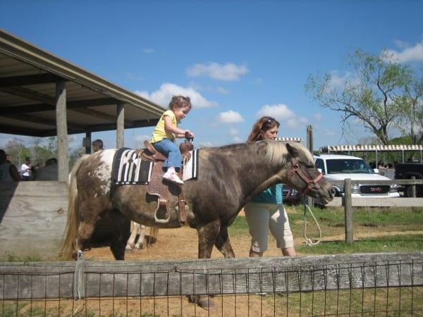 Now Full Bigkidsmallcity Meet Up Bayou Wildlife Park