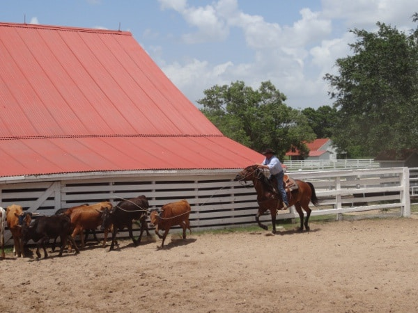 Cowboy at George Ranch Historical Park