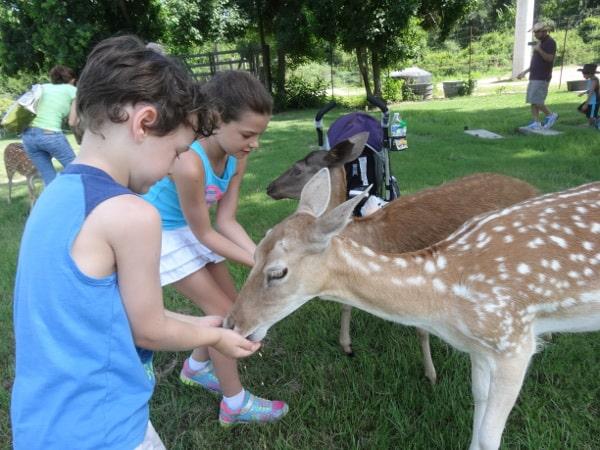 Feeding More Animals at Old Mac Donalds Farm
