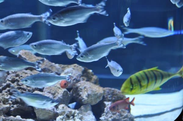 Fish at Downtown Aquarium