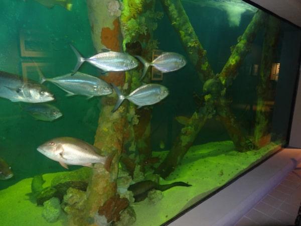 Fish at Sea Center Texas
