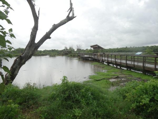 wetlands boardwalk6