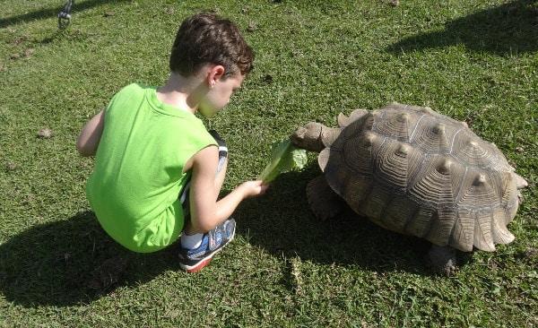 Crocodile Encounter Feeding Tortoises1