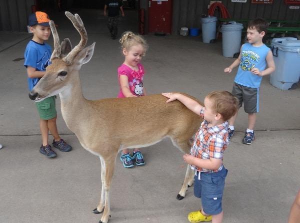 Deer at Bayou Wildlife Park