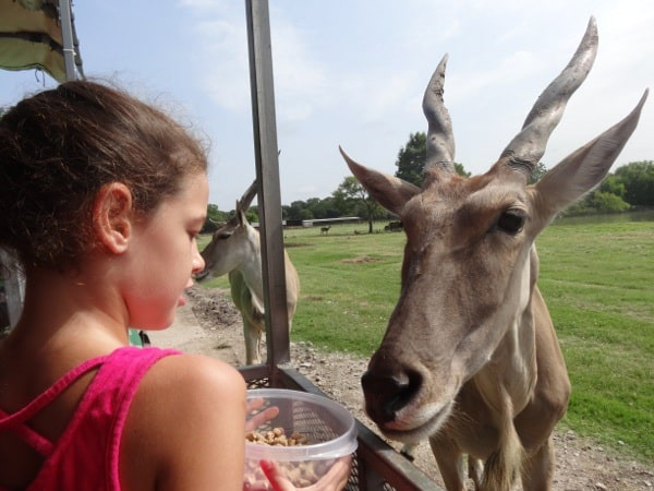 Feeding Animals at Bayou Wildlife Park