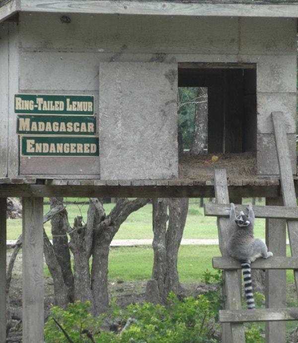 Lemeer Bayou Wildlife Park