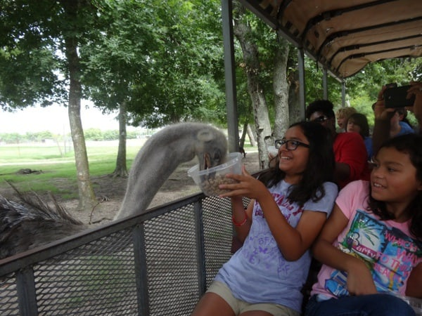 Osterich at Bayou Wildlife Park