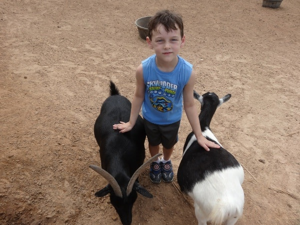 Petting Zoo at Bayou Wildlife Park1