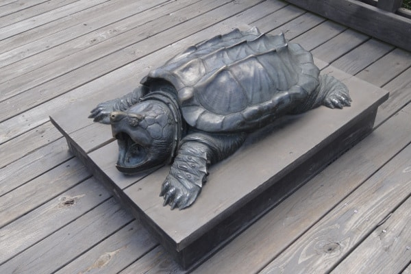 Texas Travel Information Center Turtle