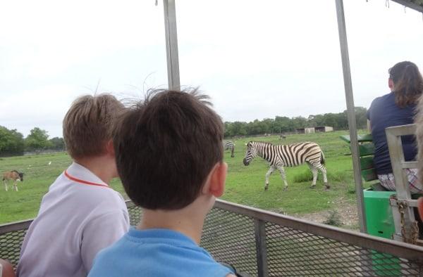 Zebra at Bayou Wildlife Park