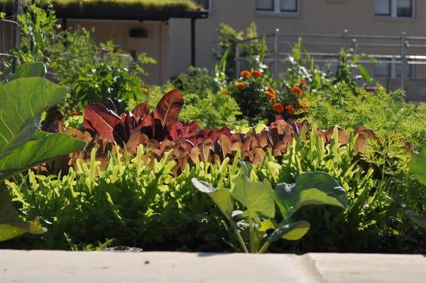 Mandell Park Veggies