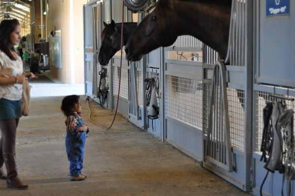 Mounted Patrol Feeding Horses Noah