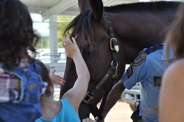Mounted Patrol Petting Horse