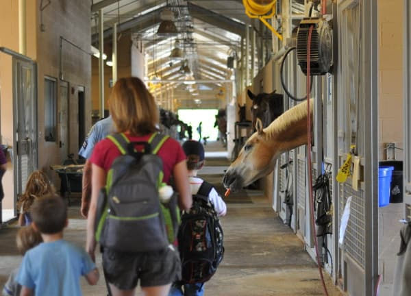 Mounted Patrol Walking Through Stables