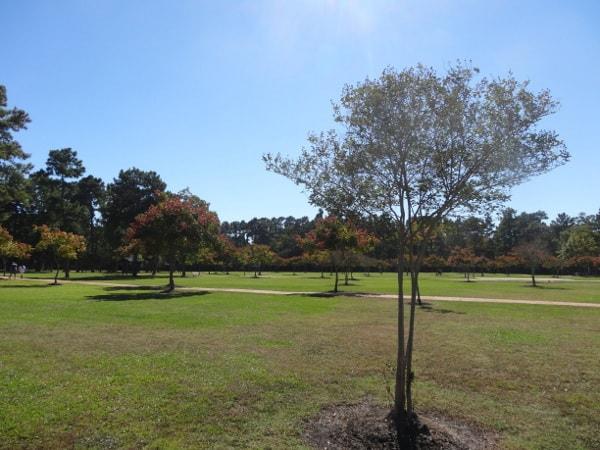 Schott Park Humble Texas