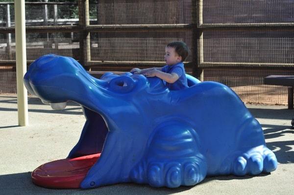 Hippo at Playground at Houston Zoo