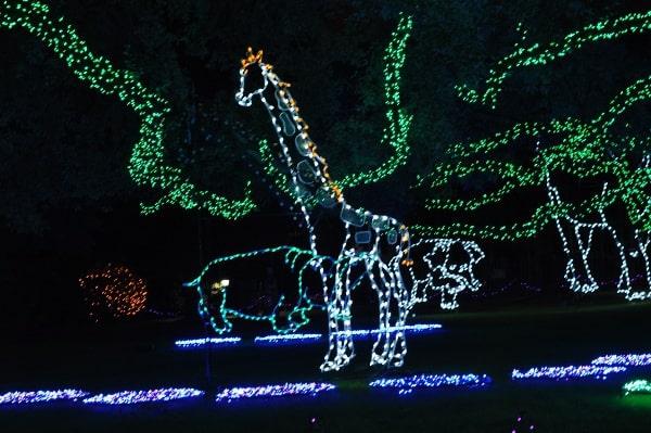 Houston Zoo Lights Giraffe