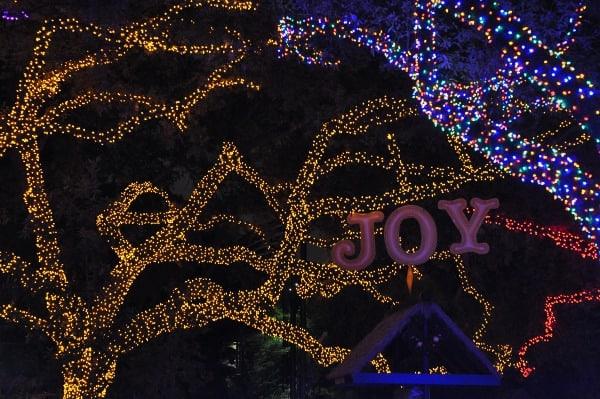 Houston Zoo Lights Joy