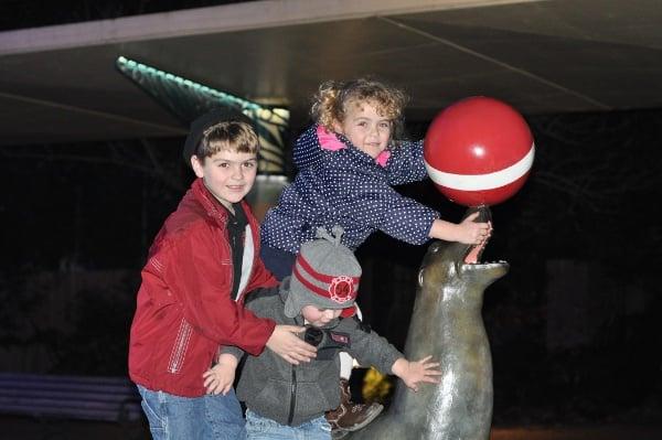 Sea Lion at Houston Zoo Lights