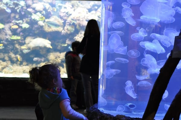 Houston Zoo Jelly Fish