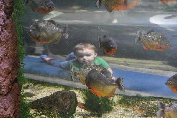 Tube Under Fish Tank at Houston Zoo