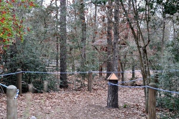 Houston Arboretum Paths