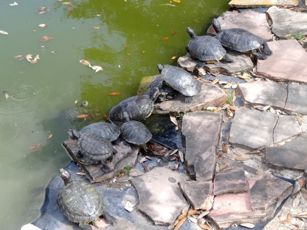 League Park Turtles