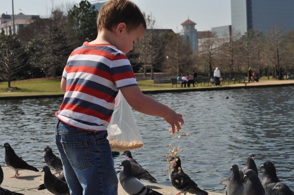 Hermann Park McGovern Lake Feeding Ducks Cheerios