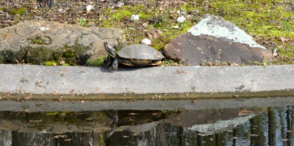 Turtles at Tomball Train Depot