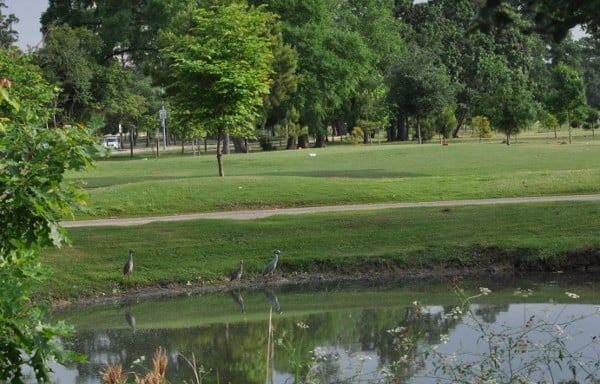 Hermann Park Golf Course Ducks