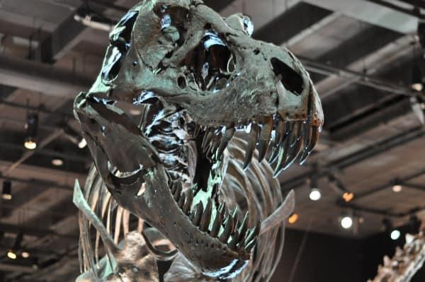 Dinosaur Teeth at Houston Museum of Natural Science