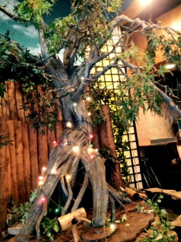 Tokyohana Tree