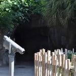 Tunnel at Houston Zoo