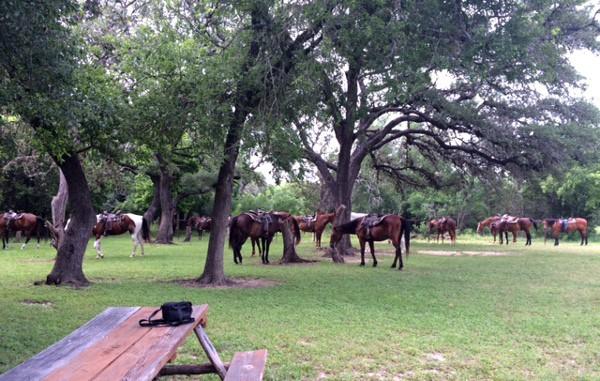 Horses at Mayan Dude Ranch in Bandera