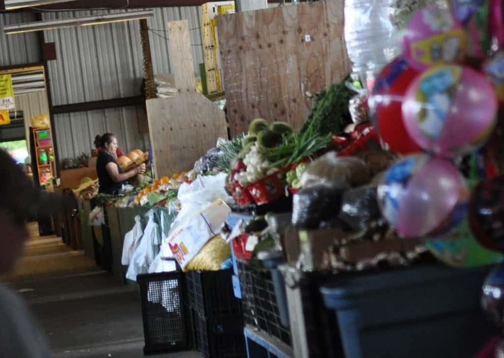 Caninos Market Back Market